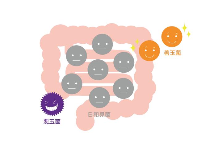 善玉菌・悪玉菌イメージ