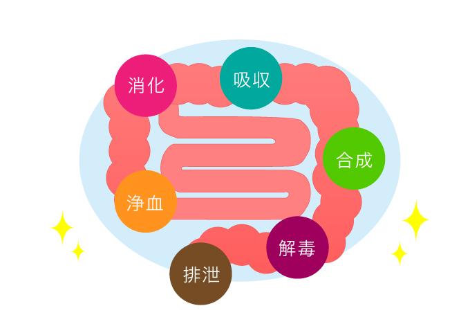 大腸のはたらきイメージ